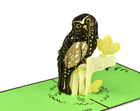Morepork in Tree Popup Card