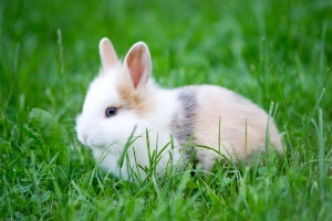 Rabbit, source stock exchange free photos