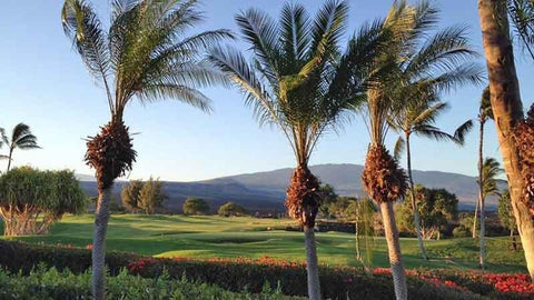 Views of Palms at The Waikoloa Kings Golf Course in Hawaii