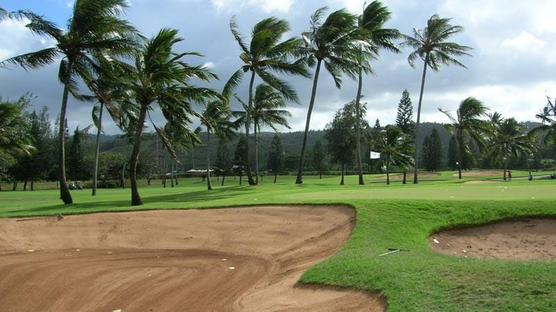 Turtle Bay Resort Fazio front nine with lots of palms blowing