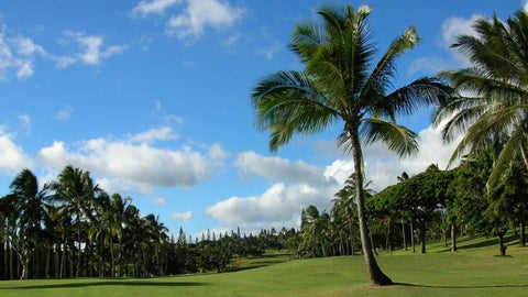 Pearl Country Club is known for lots of palms and fast greens