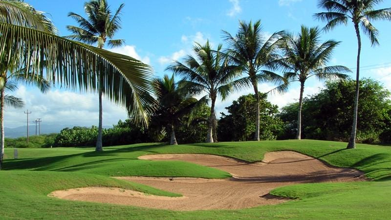 Hawaii Prince Golf Club  with lots of incredible palms