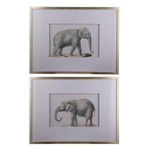 Wall Decoratives - Wall Art Set Of 2 (AB-AV43781)