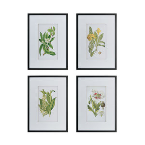 Wall Decoratives - Wall Art Set Of 4 (AB-AV44590)