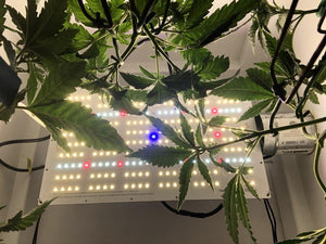 Series 2+ Heatsink Free Full Spec 120 Watt Grow Light