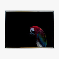 Crystal Painting - Macaw