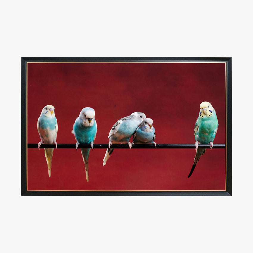 Crystal Painting - Five parrots