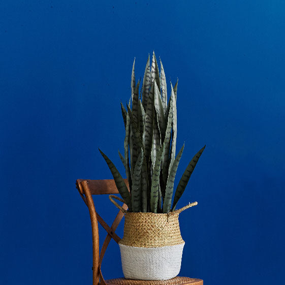 Artificial Snake Plant Sansevieria Plant with Black Planter
