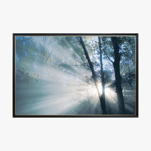 Crystal Painting - Light through the branches