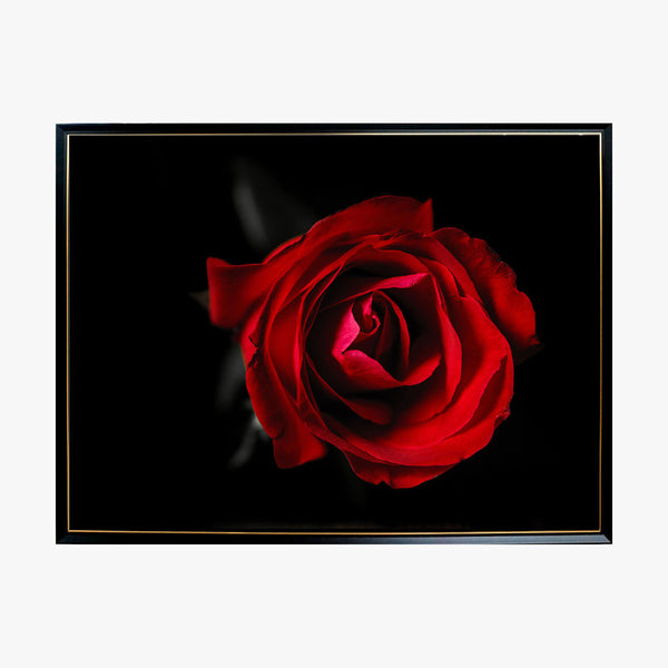 Crystal Painting - Rose in Dark
