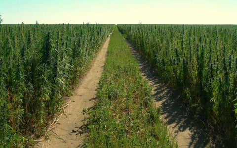 hemp farming act of 2018