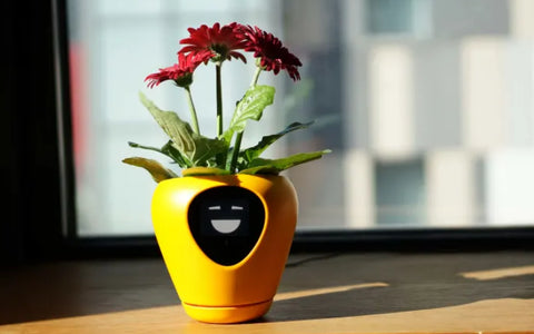 lua digital planter