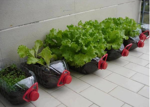 indoor veggies farming