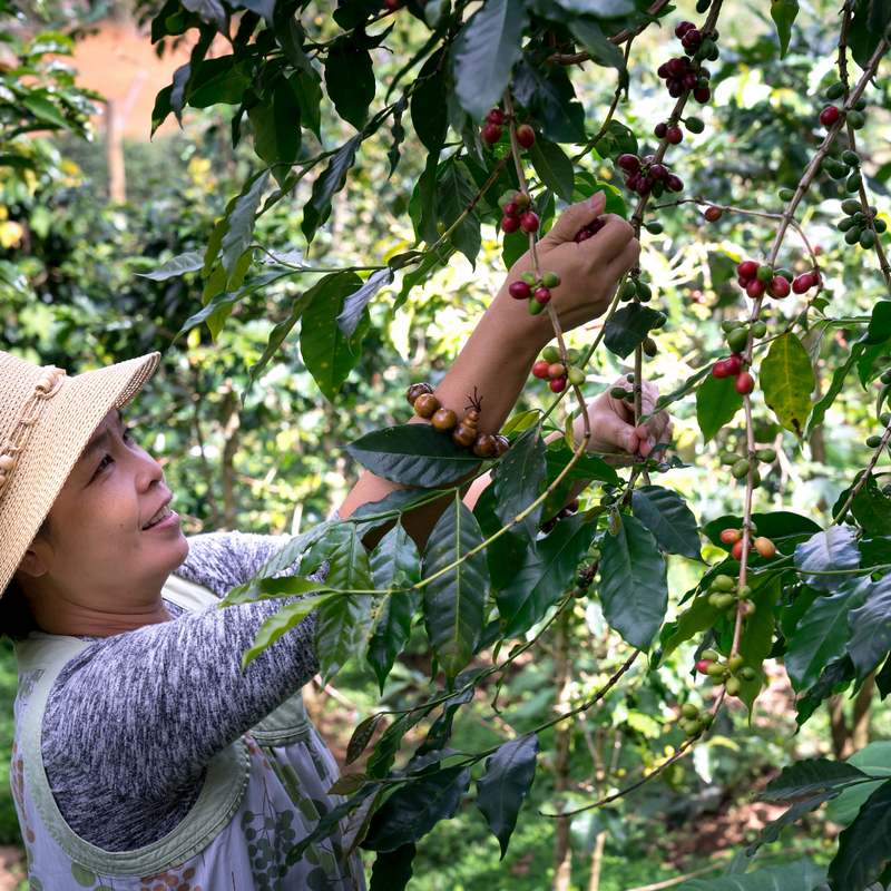 How Women are Changing the Face of the Coffee Industry
