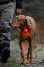 Load image into Gallery viewer, Ruffwear - The Beacon™ Safety Light high performance safety light