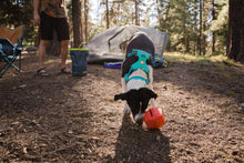 Load image into Gallery viewer, Ruffwear Front Range® Dog Harness in Aurora Teal