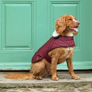 Mutts & Hounds Grape Quilted Coat