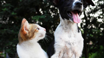 What Dog People Need to Know About Their New Cat
