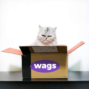 White Persian Cat Sitting In Wags Box with Serious Face