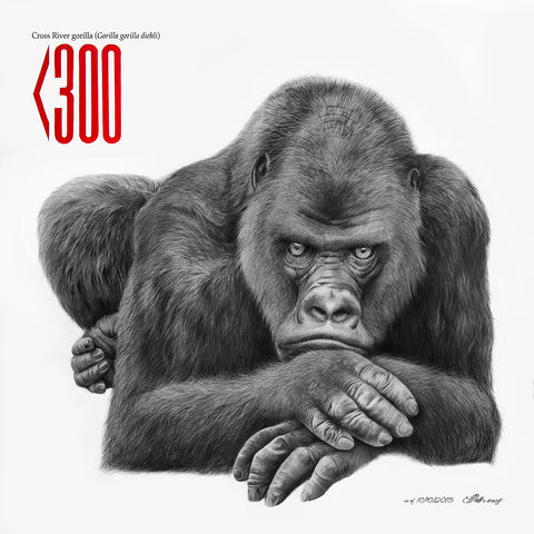 Cross River Gorilla - Signed Limited Edition Print by Peter Matthews