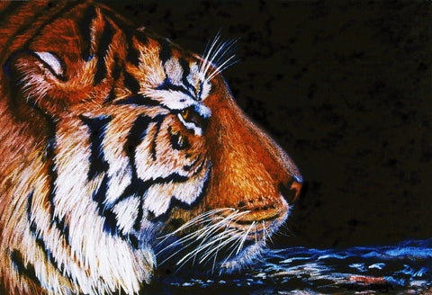 Sumatran Tiger in Water - signed limited edition print by Cynthia Sampson