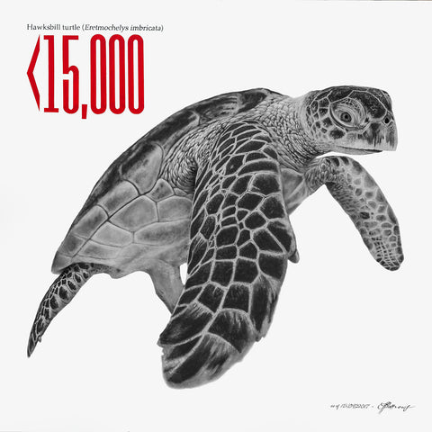 Hawksbill Turtle - Signed Limited Edition Print by Peter Matthews