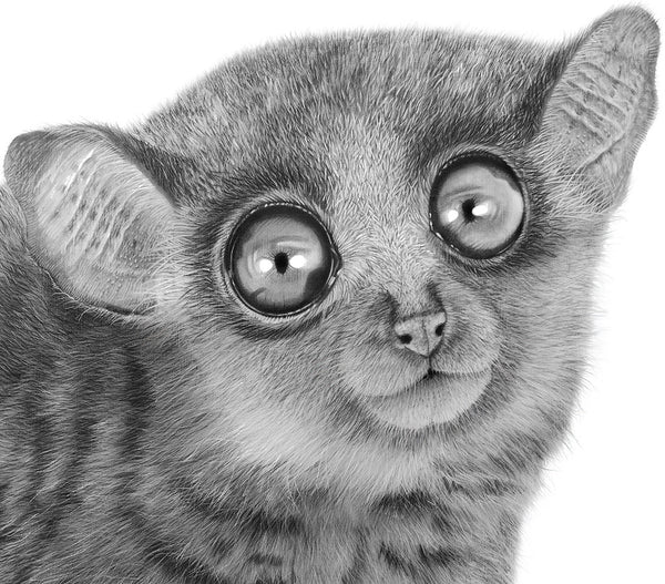Sportive Lemur - Signed Limited Edition Print by Peter Matthews
