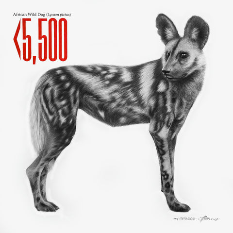 African Wild Dog - Signed Limited Edition Print by Peter Matthews