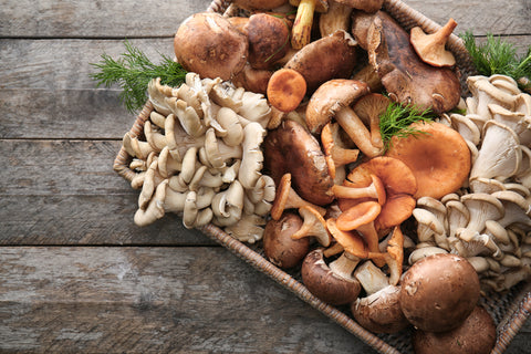 tray of many types of mushrooms