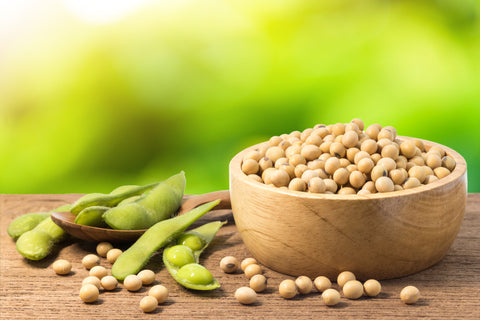 white soy beans