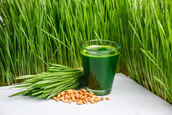a glass of wheatgrass next to some fresh cut wheatgrass