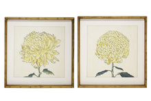 Load image into Gallery viewer, Chrysanthemum Framed Prints