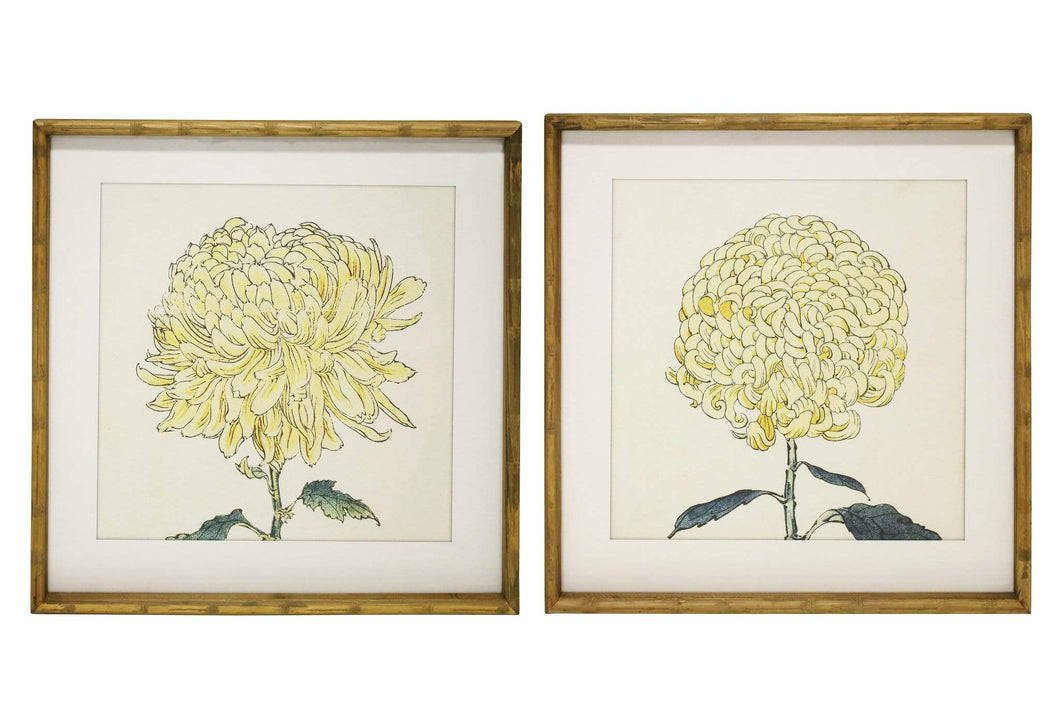 Chrysanthemum Framed Prints