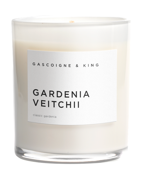 Gascoigne & King I Candle I Gardenia Veitchii (pre order now, arriving end of August)