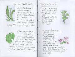 Woodland Wild Food Walk with Ffyona Campbell
