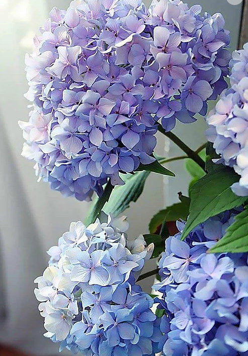Paint By Number Kit- Hydrangea