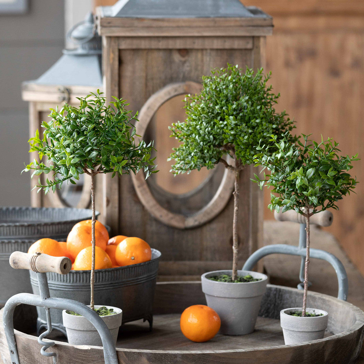 Baby Boxwood Topiary