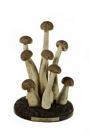 Honey Fungus Scientific Model