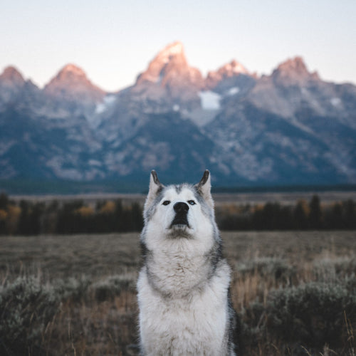 Big Teton Mood - 11