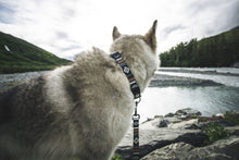 Load image into Gallery viewer, LokiWolf Dog Collar
