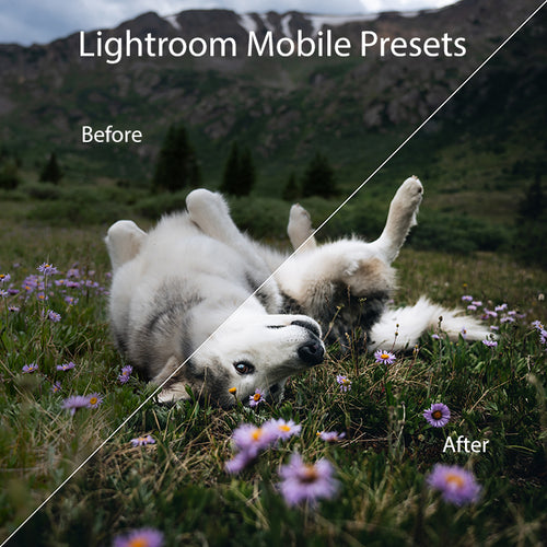 Lightroom Mobile Preset Pack – Wolves in the Wind