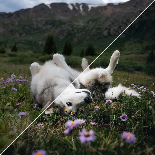 Lightroom Preset Pack – Wolves in the Wind