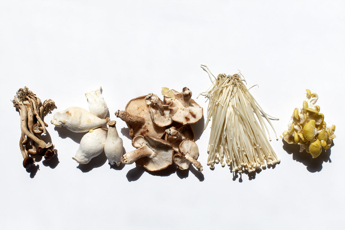 The 411 on Medicinal Mushrooms