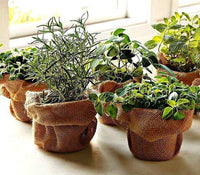Windowsill Herb Garden Collection
