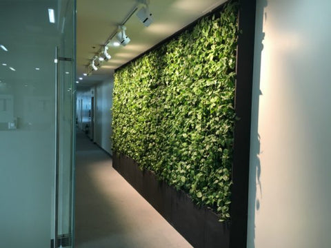 Office Interior Green Wall with Water Tank