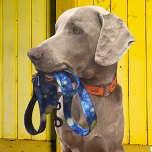 Hit the trails in style with AdventureUs fun & funky dog leashes.