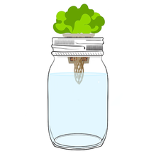 Load image into Gallery viewer, Easy-Grow Jar kit