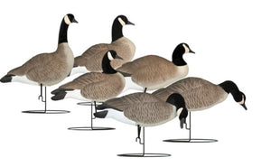 'Rugged' series | Canada Goose Full Body Touchdown 6pk - Flocked Head