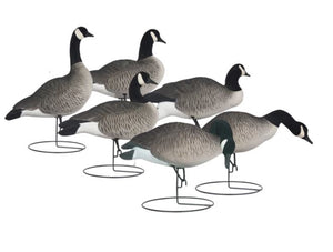 'Rugged' series | Canada Goose Full Body Touchdown 6pk - Fully Flocked