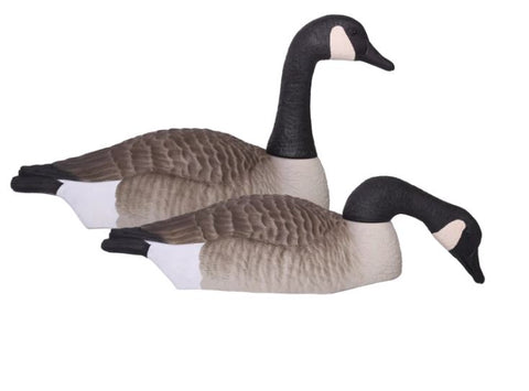 'Field' series | Canada Goose Shell Touchdown - 12pk